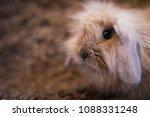 studio shot of domestic rabbit...   Shutterstock . vector #1088331248