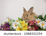 cute rabbit with flowers on the ...   Shutterstock . vector #1088331254