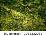 swamp algae. green algae... | Shutterstock . vector #1088332088