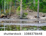 view of a mother and 2 cubs... | Shutterstock . vector #1088378648