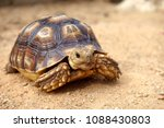 Stock photo close up african spurred tortoise resting in the garden slow life africa spurred tortoise 1088430803
