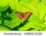 orange butterfly in the green... | Shutterstock . vector #1088513330