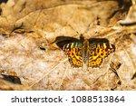 beautiful butterfly among... | Shutterstock . vector #1088513864