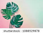 summer tropical background with ... | Shutterstock . vector #1088529878
