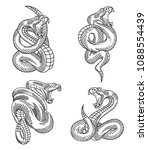 viper snake set. hand drawn... | Shutterstock .eps vector #1088554439