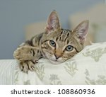 Stock photo lifestyle portrait of young kitten at home 108860936