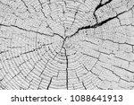 mahogany tree  life rings ... | Shutterstock . vector #1088641913