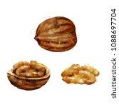 walnut on white background.... | Shutterstock . vector #1088697704