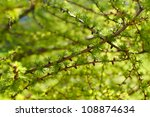 Young Branch In Spring From...