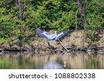 gray heron  ardea cinerea  | Shutterstock . vector #1088802338