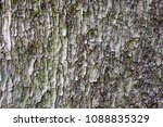 Close Up Of Tree Bark In...