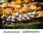 close up mushrooms in woods | Shutterstock . vector #1088940593