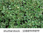 top view group of green leaves... | Shutterstock . vector #1088949899