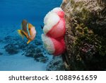 a clownfish with a sea anemone... | Shutterstock . vector #1088961659