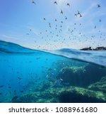 seabirds  mediterranean gulls   ... | Shutterstock . vector #1088961680