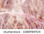 sweet colorful of grass flowers ... | Shutterstock . vector #1088984924