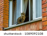 Closeup Of A Tabby Cat On The...