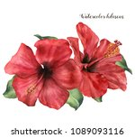 Stock photo watercolor hibiscus bouquet hand painted exotic floral illustration with red flower and leaves 1089093116