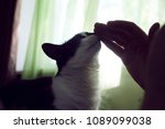 Small photo of A man petting a cat