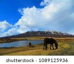 horses in iceland | Shutterstock . vector #1089125936