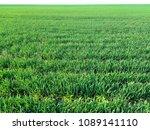 green wheat field | Shutterstock . vector #1089141110