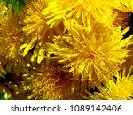 blooming of spring flowers | Shutterstock . vector #1089142406