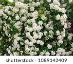 blooming of spring flowers | Shutterstock . vector #1089142409