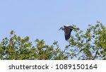 gray heron  ardea cinerea ... | Shutterstock . vector #1089150164
