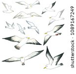 seagulls watercolor hand drawn... | Shutterstock . vector #1089167249