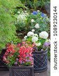 colorful terrace garden with... | Shutterstock . vector #1089230144