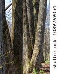 forest spring city | Shutterstock . vector #1089269054