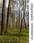 forest spring city | Shutterstock . vector #1089269060