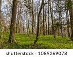 forest spring city | Shutterstock . vector #1089269078