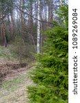forest spring city | Shutterstock . vector #1089269084