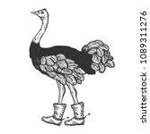 ostrich in boots with spur bird ...   Shutterstock . vector #1089311276