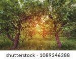apple garden at sunset  or...   Shutterstock . vector #1089346388