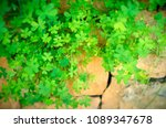 conceptual image of finding... | Shutterstock . vector #1089347678