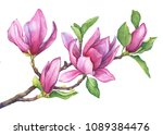 Branch Of Purple Magnolia...