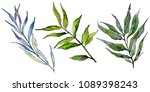 willow branches in a watercolor ... | Shutterstock . vector #1089398243
