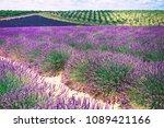 beautiful image of lavender... | Shutterstock . vector #1089421166