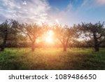 apple garden at sunset  or...   Shutterstock . vector #1089486650
