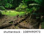 tropical rainforest with many... | Shutterstock . vector #1089490973
