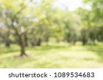 abstract blur city park bokeh... | Shutterstock . vector #1089534683