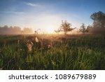 beautiful natural  summer ...   Shutterstock . vector #1089679889
