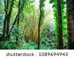 jungle in hawaii | Shutterstock . vector #1089694943