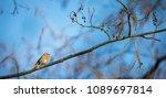 the european robin  erithacus... | Shutterstock . vector #1089697814