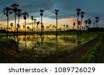 sugar palm tree in twilight | Shutterstock . vector #1089726029