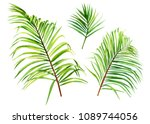set green leaves of a palm tree ... | Shutterstock . vector #1089744056