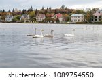 swans in pond in reykjavik ... | Shutterstock . vector #1089754550