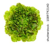 young batavia red lettuce from... | Shutterstock . vector #1089792140